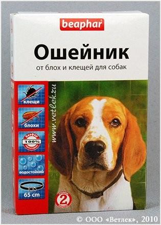 Аксессуары для собак на авито
